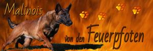 Homepage von den Feuerpfoten