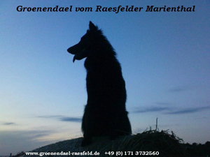 Homepage vom Raesfelder Marienthal