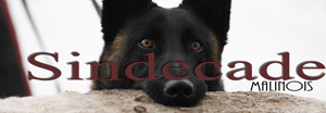 Homepage Sindecade