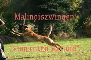 Homepage vom roten Marand